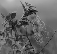Spider web with dew drops on branch