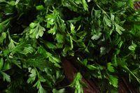 Bunch of fresh green parsley leaves on dark background