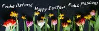 Ostern, Frohe Ostern, Happy Easter, Feliz Pascua, Internationale Ostergrüsse, Banner, Header,