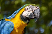 Macaw between vegetation of the Brazilian rainforest
