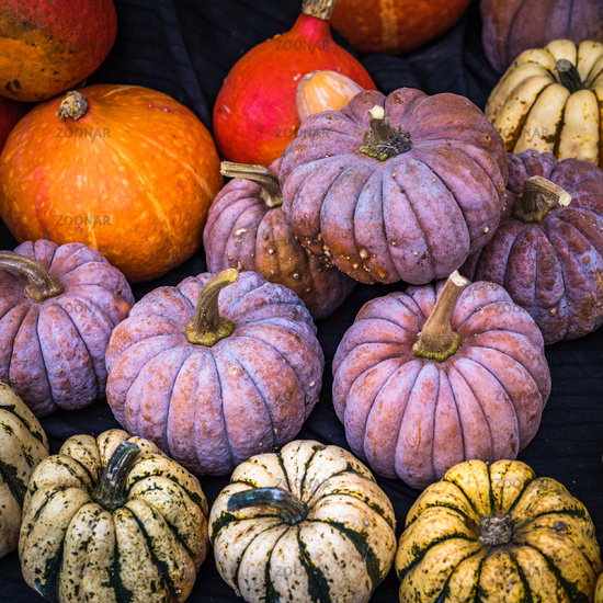 Collection of pumpkins at a farmers market