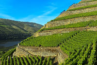 Terraced vineyards with dry stone walls on the steep slopes, Pinhao, Douro Valley, Portugal