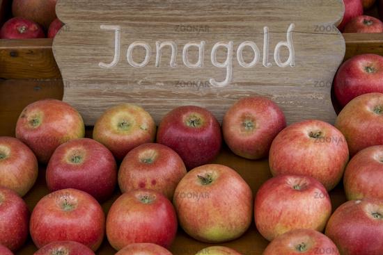 Apple (Malus), Jonagold variety