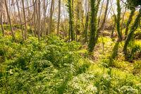 Leafy wooded area next to the Madre del Agua stream in Grimaldo