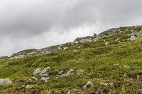 reindeers in norwegian wilderness