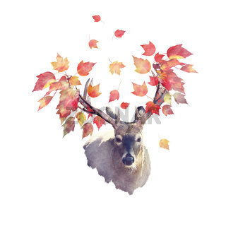 Deer male with autumn leaves