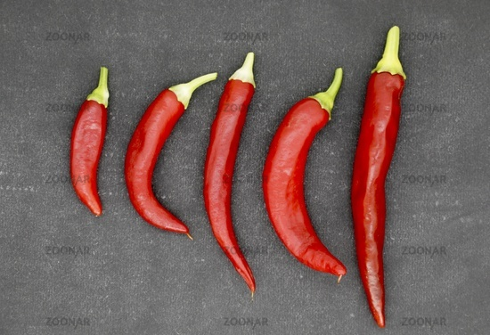 Red Pepper on grey Background