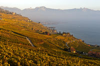 The Lavaux vineyards at Lake Geneva in autumn, Rivaz, Lavaux, Vaud, Switzerland