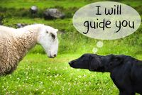 Dog Meets Sheep, Text I Will Guide You