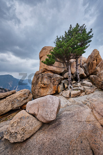 Rock with pine trees in Seoraksan National Park, South Korea