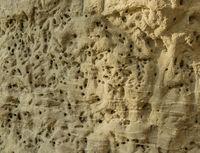 Breeding place a wild bee colony in a steep wall of sandstone near Sipplingen