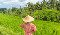 Relaxed fashionable caucasian woman wearing red asian style kimono and traditional asian paddy hat looking at beautiful green rice fields and terraces on Bali island