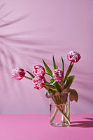 Glass vase with a bouquet of pink tulips on a pink background