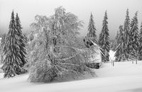 Vogland in winter - The house behind the trees