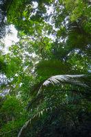 jungle forest, Khao Sok, Thailand