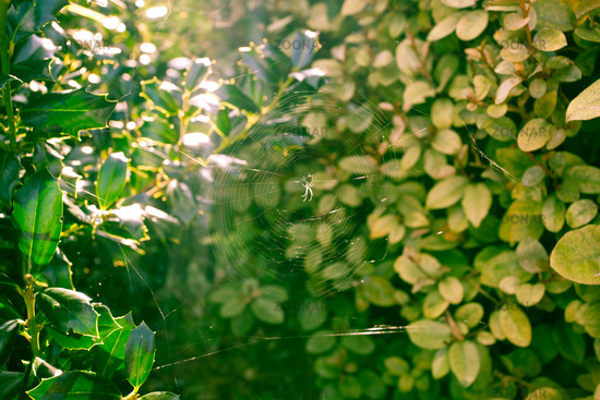 Sun Rays Shining Through Green Bush Leaves Forest Plants