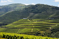 Vineyards in the port wine region Alto Douro, Pinhao, Douro Valley, Portugal