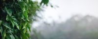 Closeup on dark green leaves, spiderweb covered with morning dew, wide banner with space for text on right side - African rainforest jungle background