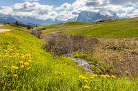 Alpine meadows and mountain stream on the Alpe di Siusi