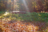 a place of rest in the forest, table and bench in the sun