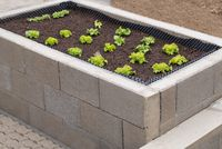 green salad grows in the raised bed of stone