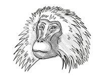 shaggy male Gelada Monkey Cartoon Retro Drawing