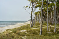 the Darss-Forest at the Western Beach