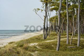Ostsee Darss Weststrand