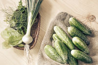 Fresh young cucumbers, dill and green onions.