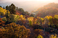 Sunset Forest Autumn Akita Japan
