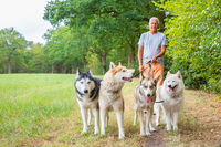 Man walks with group of husky dogs in nature