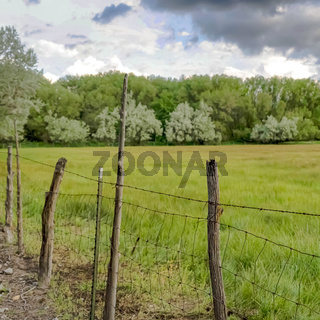 Square frame Grassy field and lush trees behind wire fence and wood posts lining a road