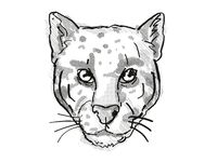 Retro cartoon style drawing of head of a Clouded Leopard or Neofelis nebulosa