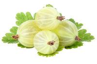 Stachelbeeren Stachelbeere Früchte Beeren Frucht Blätter Obst Freisteller freigestellt isoliert
