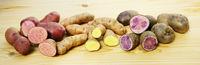 Bunte Kartoffeln, Kartoffelvielfalt, Banner, Header, Headline, Panorama, Textraum, copy space