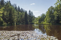Ufer an einem Woog im Pfaelzerwald