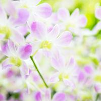 Beautiful orchid flowers in garden