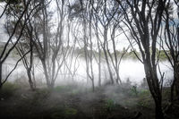 Misty lake and forest in Rotorua, New Zealand
