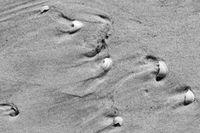 Brocken seashells and wet sand beach