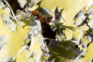 Bullet holes and hits