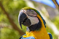 Colorful macaw in the vegetation of the Brazilian rainforest
