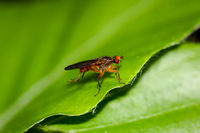 this is a fly on a plant