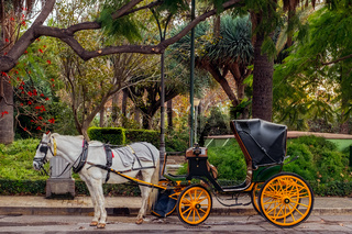 exotic tourist transport in carriage with horse in Malaga