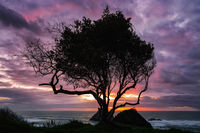 A Lone Tree at Sunset, Trinidad, California, USA