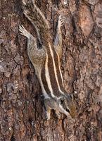 Chipmunk on a tree trunk