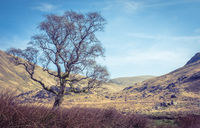 Rocky Scottish Landscape