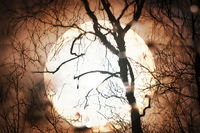 Sunset sun through telescope through silhouette of bare tree