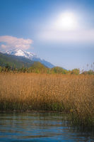 Rushes growing around the shores of the Lake Ohrid
