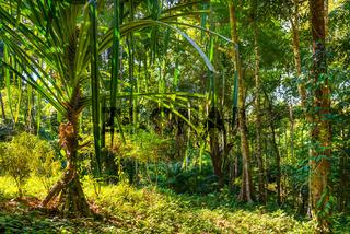 Landscape of tropical jungle forest
