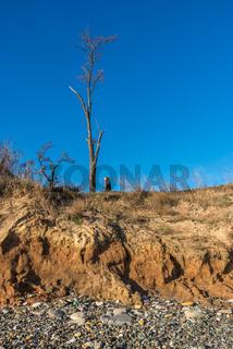 Bare tree on the slope near the sea shore